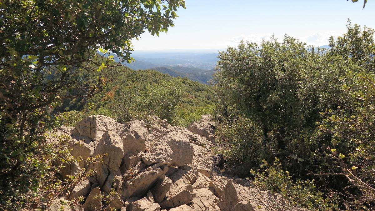 Carena Puig Bestracà